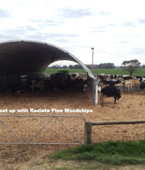 Calving Shed with Pine Woodchips