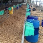 Wood chips in Calf Pens