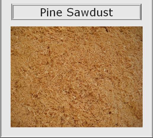 Product details pine wood chips sawdust