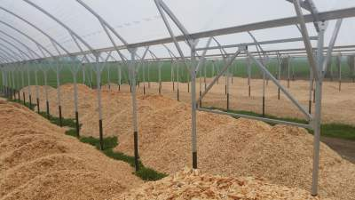 Cow Shed filled with fresh pine wood chips
