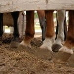 prevent lameness in your horses