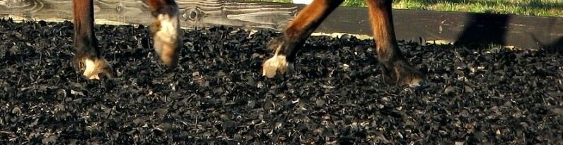 horse legs on wood chips provide soft surface for horses