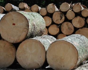 Tree Logs cut and ready for processing