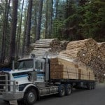 Mt-Gambier Sawmill Transporting timber logs