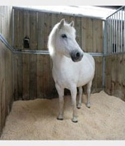 horse standing in stable with soft bedding