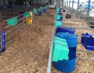 our-services-include-free-quotes-for-Wood-chips-in-Calf-Pens
