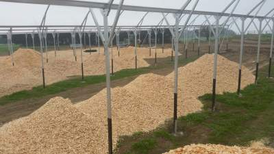 Cow Shed filled with pine woodchips