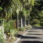 portland-gardens-palm-lane-uses- wood chip-mulch-in-the-garden-beds