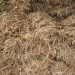 products-available-bulk-post-peelings-mulch