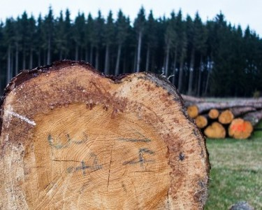 Timber Log Parts Cross-section